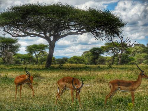 01 safari zanzibar