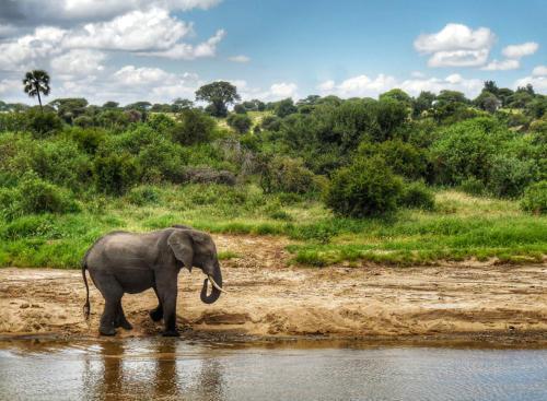 03 safari zanzibar