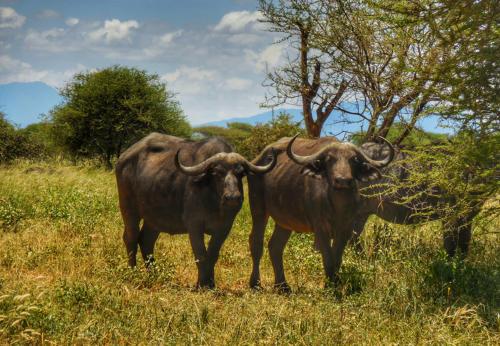 04 safari zanzibar