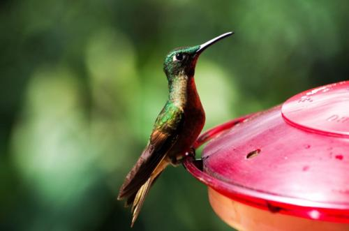 06 Ekvádor