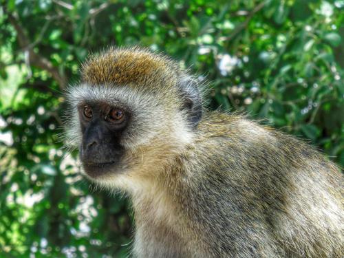 07 safari zanzibar