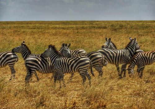 08 safari zanzibar