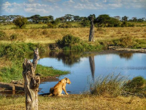 09 safari zanzibar