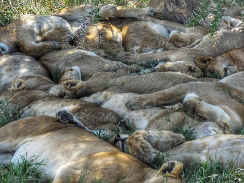 10 safari zanzibar