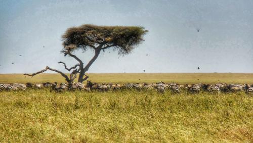 11 safari zanzibar
