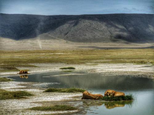 12 safari zanzibar