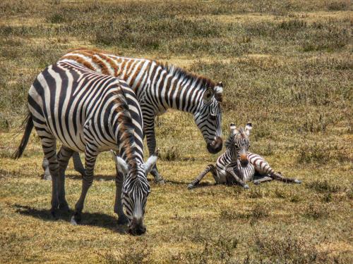 13 safari zanzibar