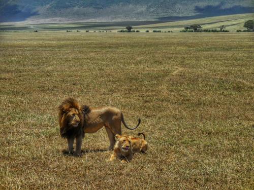 15 safari zanzibar
